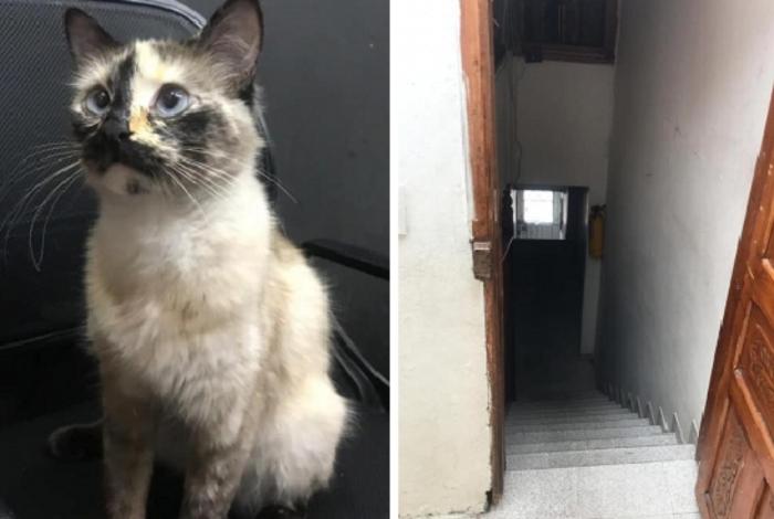 Gato Gatubela impediu que o bebê Samuel caísse escada abaixo
