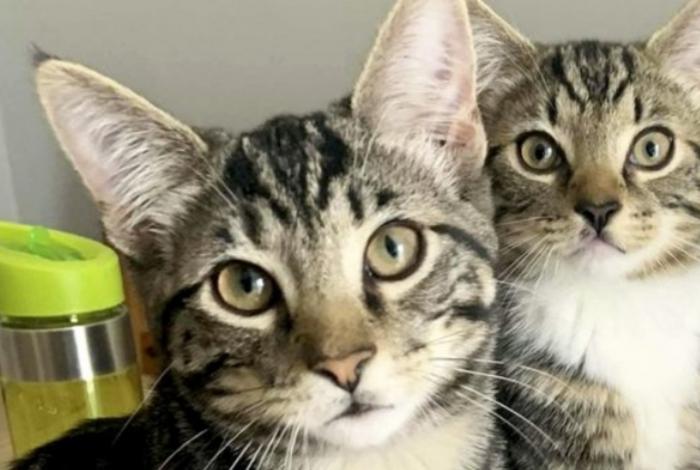 Os dois gatinhos que foram adotados pela dona de casa em março deste ano, quando tinham apenas seis semanas