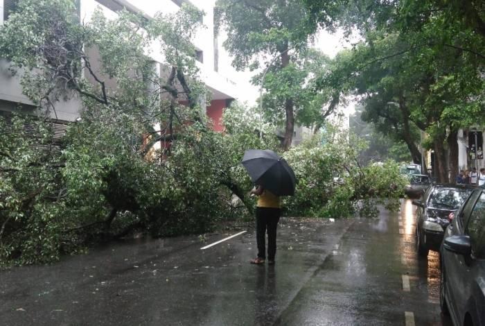 Chuva com vento causou queda de árvore em dois pontos da Avenida Gomes Freire, causando a interdição da via