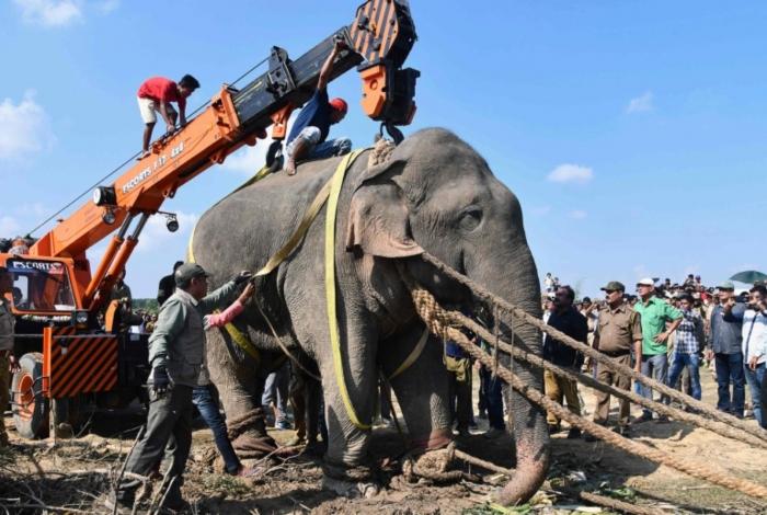 Elefante conhecido como Osama bin Laden foi capturado após matar várias pessoas