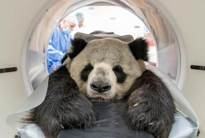 Animal precisou ser sedado para realizar exame