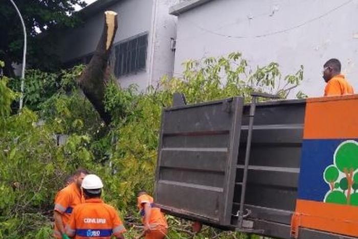 Árvore caiu na Avenida Maracanã