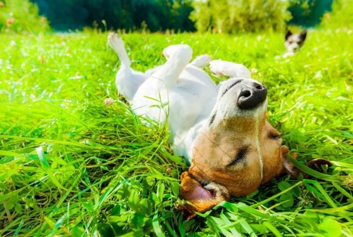 O verão está chegando e é preciso proteger os pets do sol