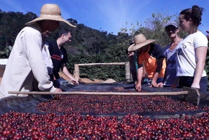 O Estado do Rio tem hoje cerca de 2.400 produtores de café