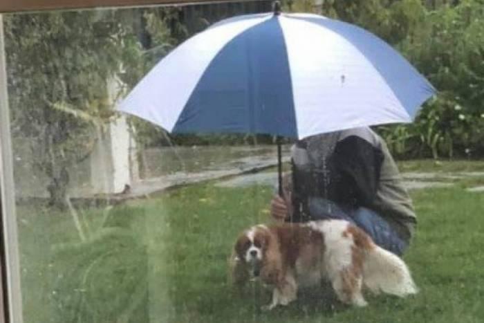 Cachorro e pai de Brandi Leahy