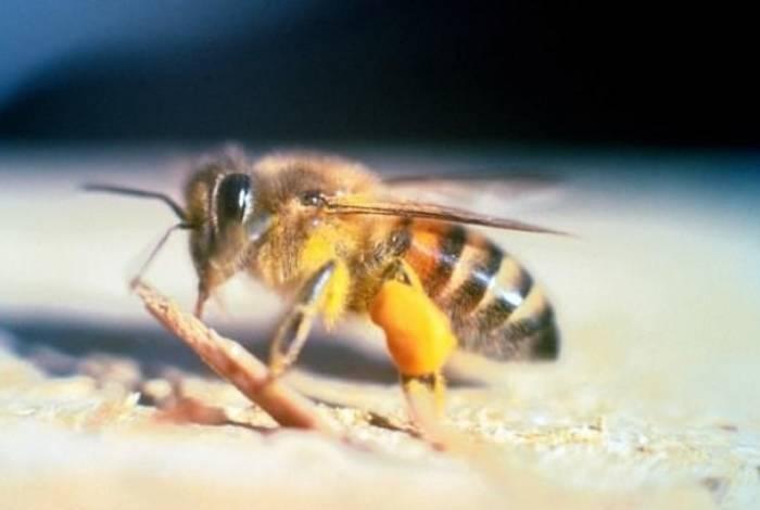 Ataque de abelhas deixou 18 feridos