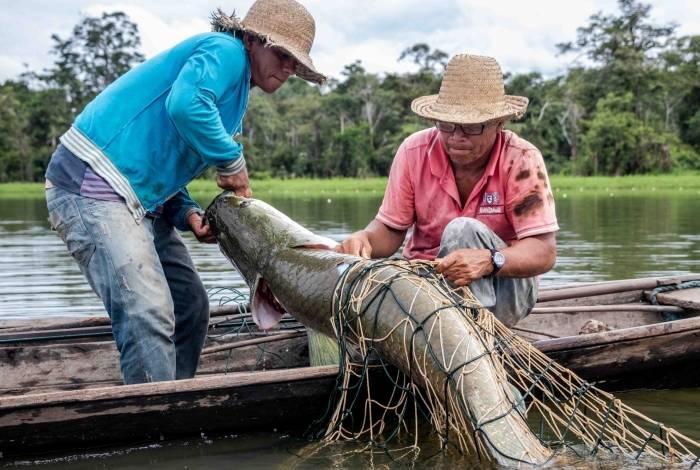 Pirarucu pode atingir três metros de comprimento e 200 quilos. Dele se aproveita quase tudo