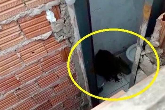 Assustado, animal se escondeu no banheiro do local
