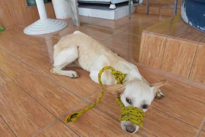 Animais vítimas de maus-tratos em casa localizada no bairro Piedade, na Zona Norte