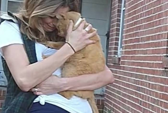 Gato pulou no colo da dona assim que a viu