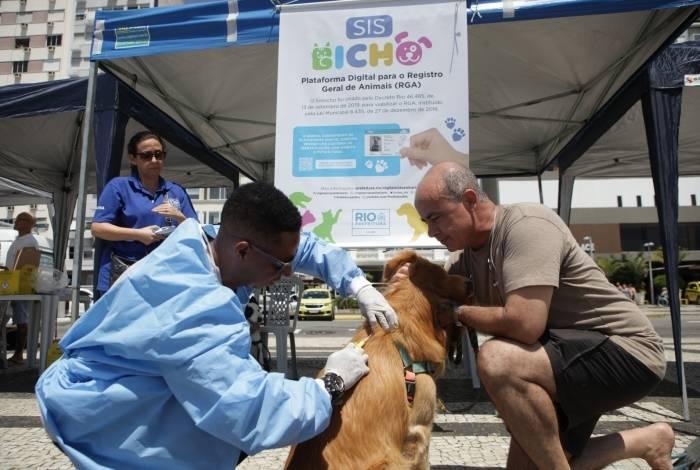 Campanha da Prefeitura do Rio de chipagem de animais em Copacabana