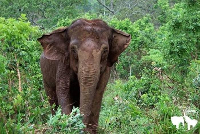 Ramba tinha 53 anos e pesava aproximadamente 4 toneladas