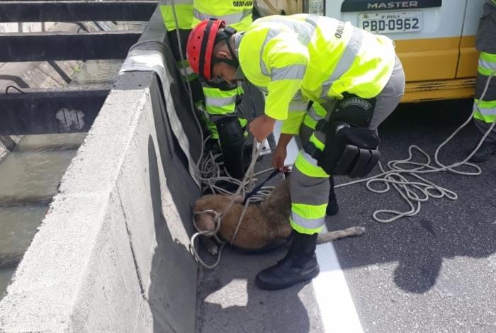 Um cachorro foi resgatado do canal da Linha Amarela por agentes da Lamsa na manhã deste sábado