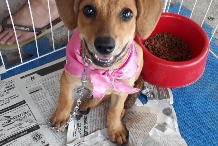 Caxias Shopping promove Campanha de Adoção de Animais
