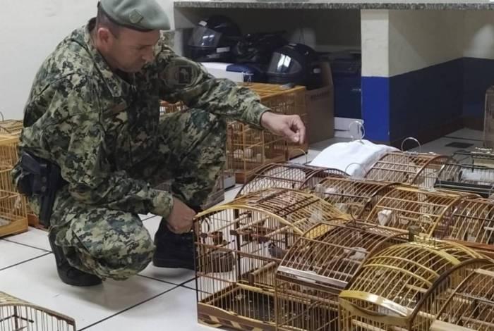 Policiais resgatam aves silvestres em torneio clandestino
