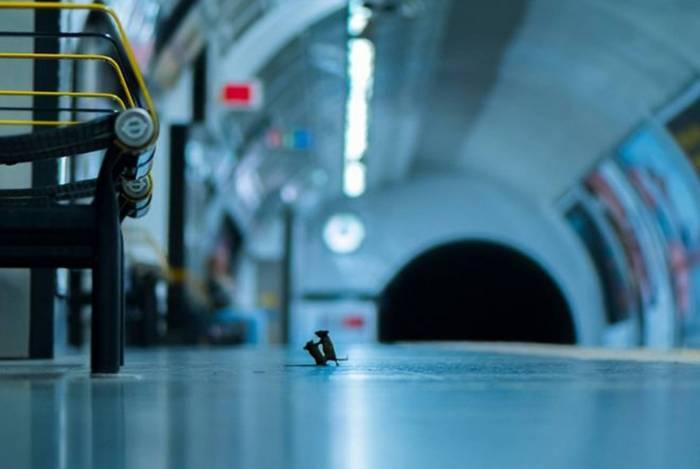 Foto de Sam Rowley foi chamada de 'Briga na Estação'