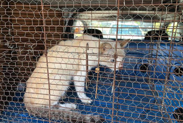 Os animais regatados foram levados para a ONG Golias, onde receberão tratamento veterinário