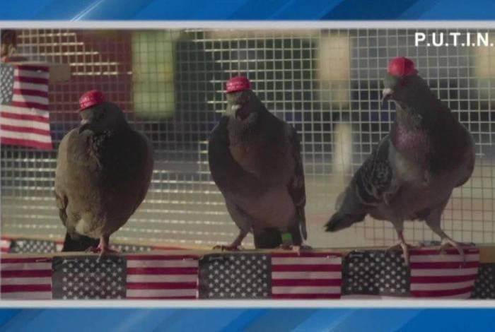 Aves foram vistas em Los Angeles