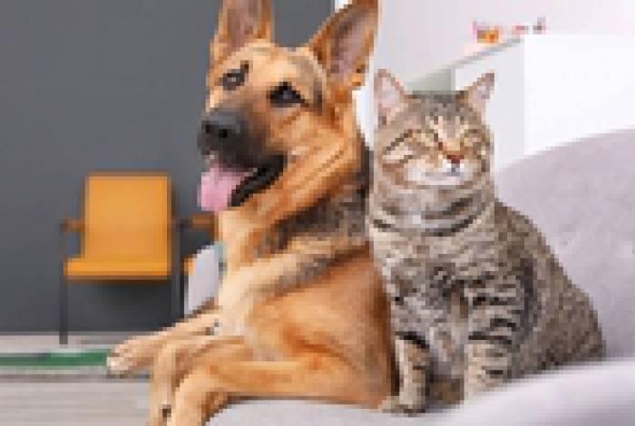 Gatos e cachorros