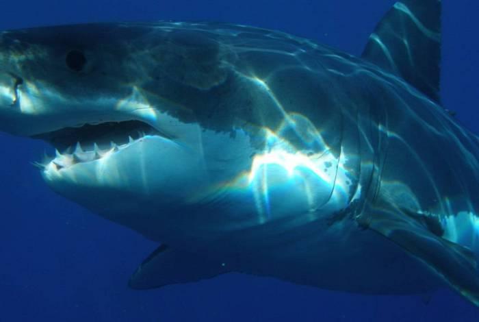 Tubarão atacou equipe de pesquisa
