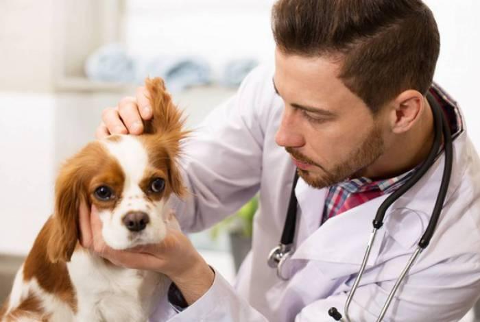 Levando o cachorro ao veterinário