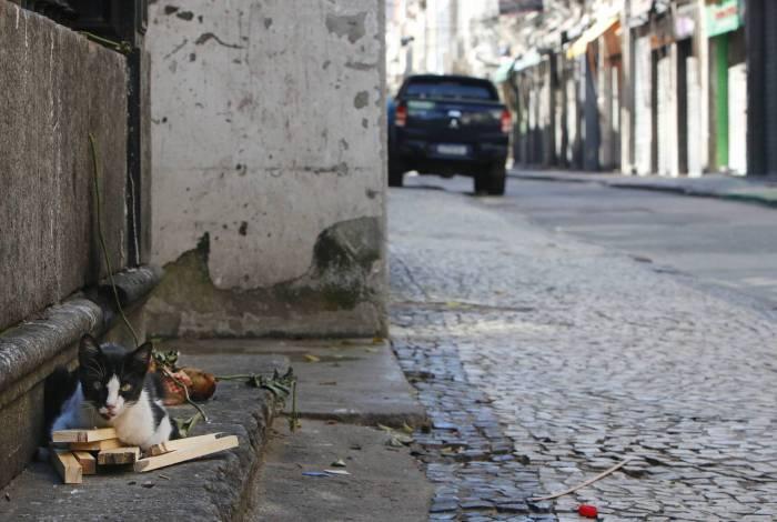 Rio de Janeiro - RJ  - 26/04/2020 - COVID 19 - Coronavirus na cidade do Rio - Animais abandonados no Rio durante a pandemia. Com a cidade mais vazia durante a pandemia de coronavirus, os animais abandonados ocupam diversas areas da cidade - na foto, gatos no SAARA, Rua da Alfandega, centro do Rio -  Foto Reginaldo Pimenta / Agencia O Dia