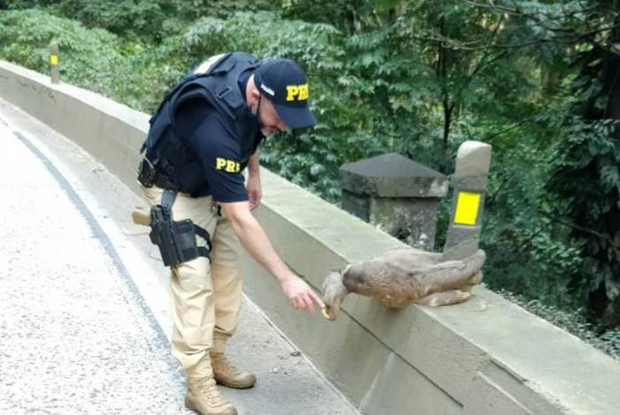 Animal parecia agradecer ao agente pelo auxílio prestado. Trânsito parou para registrar a ação