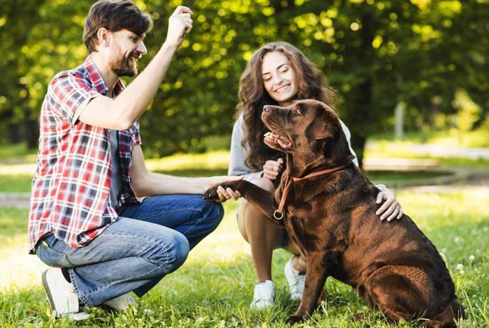 Especialista indica os direitos e os deveres dos proprietários de pets