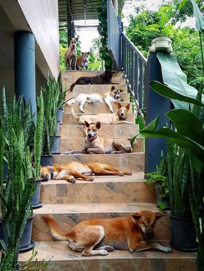 Casal adotou 15 cachorros após perder um