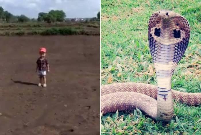 Menino da Índia quase foi atacado ao tentar pegar cobra-rei, espécie mais perigosa do mundo