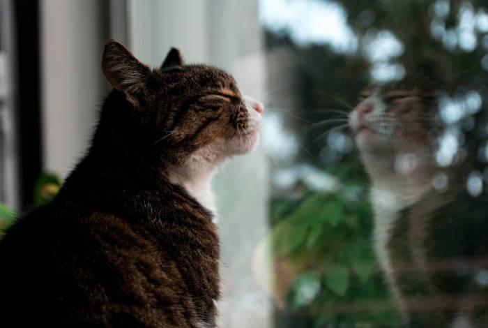 O gato e a solidão