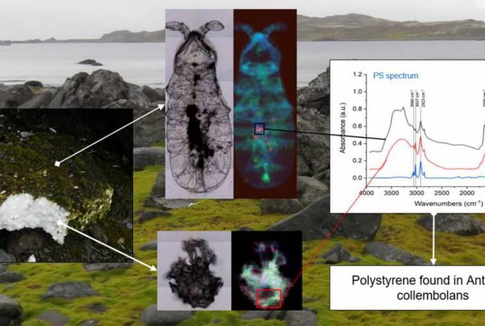 Estudo detectou plástico na Antártica