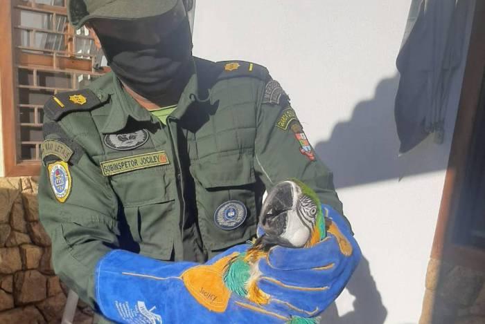 Animal, que não estava ferido, foi conduzido para a unidade do Ibama em Seropédica