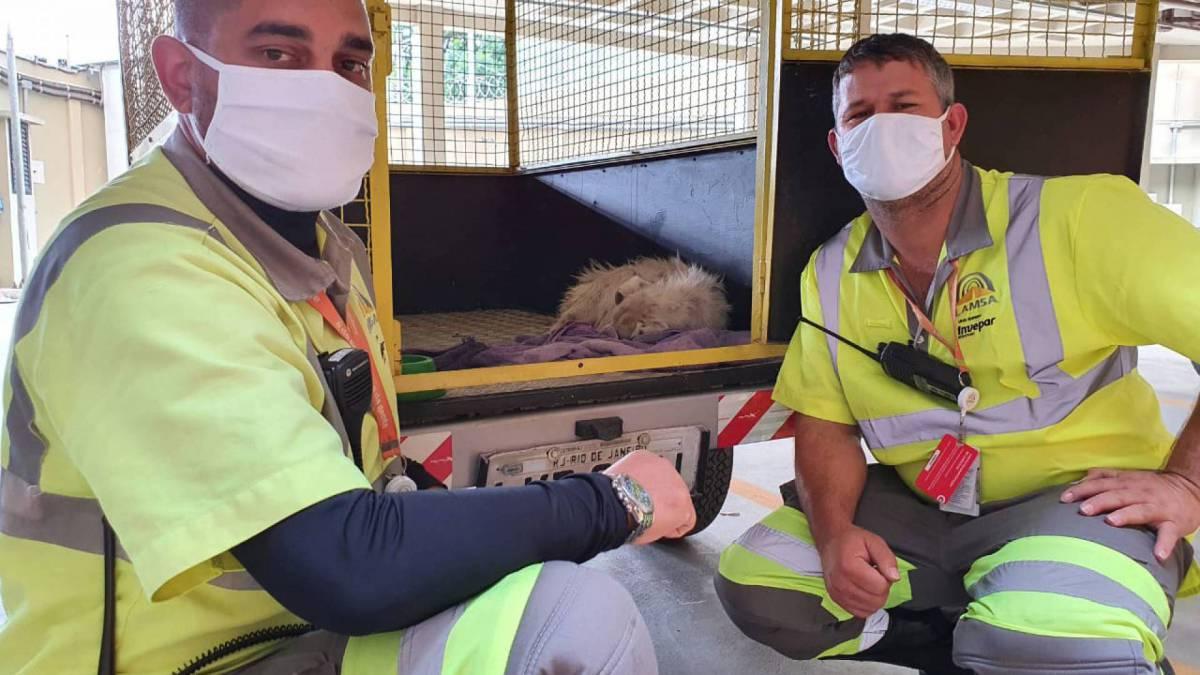 Cãozinho foi resgatado nesta terça-feira