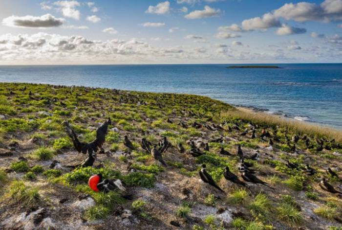 Nova temporada de 'Brasil Selvagem' estreia no National Geographic