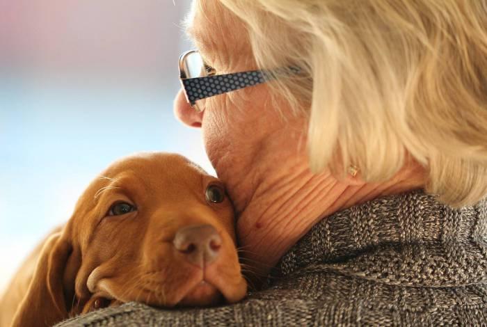 Cachorros, ótimas companhias para idosos