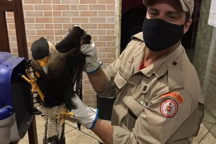 Captura do animal ocorreu nesta sexta-feira por agentes do Corpo de Bombeiros