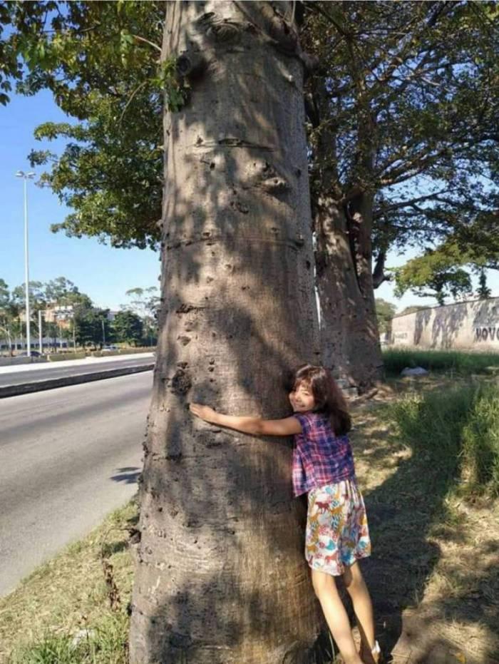 Criança abraça Baobá no Trevo das Missões: trio de árvores vai ganhar placas informativas