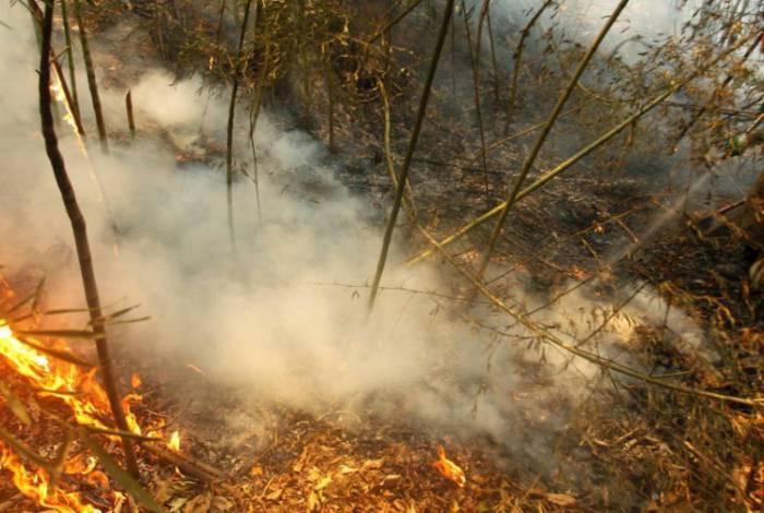 Incêndios florestais atingem a região do Pantanal, em Mato Grosso do Sul
