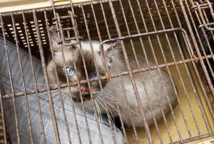 Jair Bolsonaro decidiu sancionar a lei que aumenta a punição para os crimes de maus-tratos contra cães e gatos