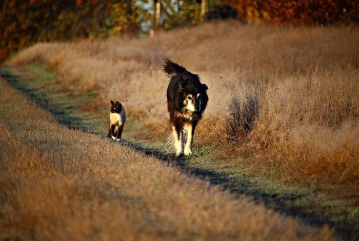 Gatos e cachorros mais protegidos