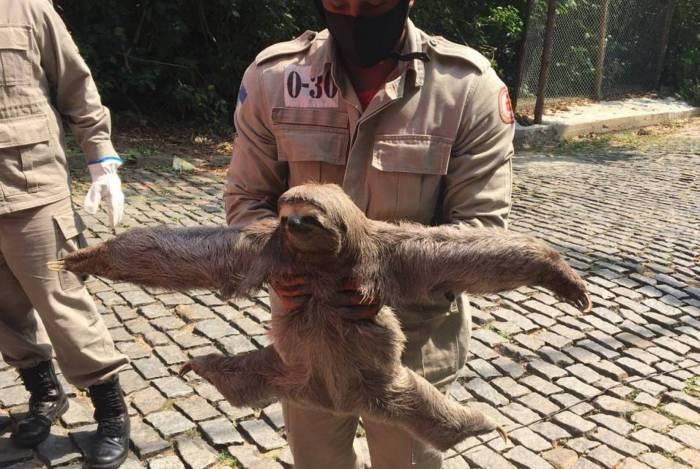 Bombeiros resgataram uma preguiça no bairro Duarte da Silveira