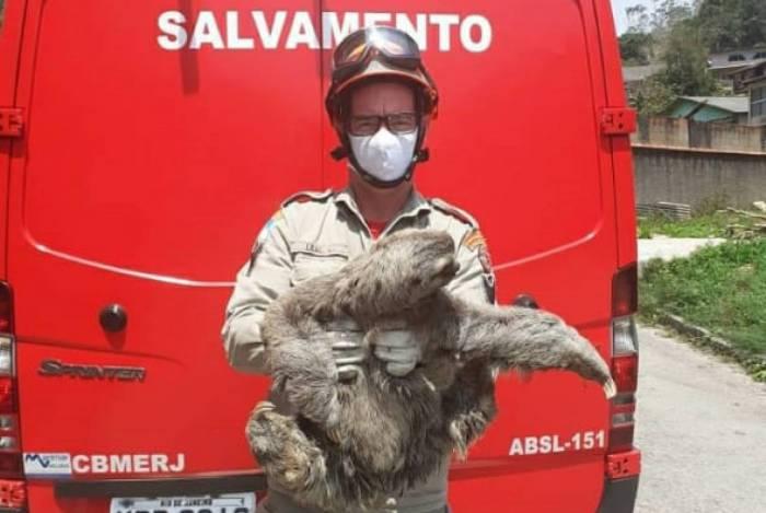 Bicho-preguiça foi resgatado em Mury