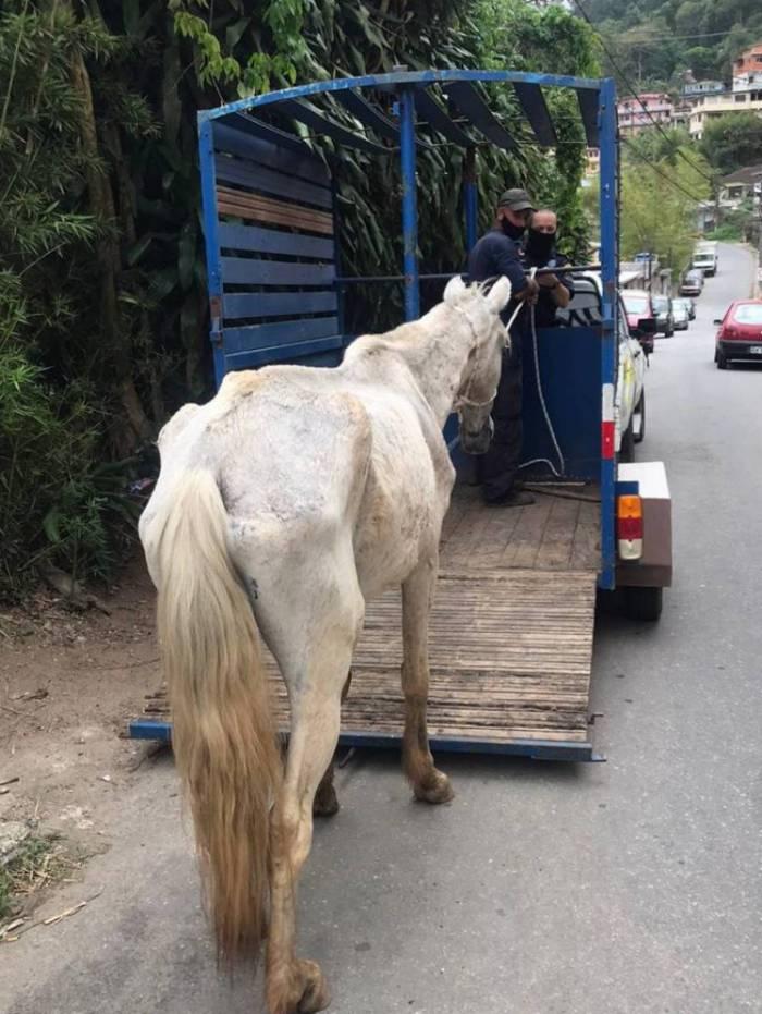Animal foi resgatado com sinais de maus-tratos e levado para o curral municipal