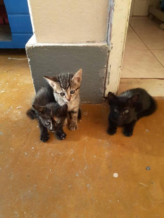 Animais recolhidos das ruas estarão disponíveis para adoção