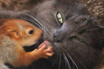 Gatinha adota esquilo - Reprodução