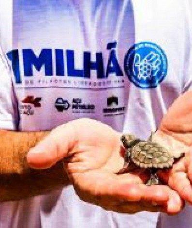 O programa já realizou mais de cem ações de soltura de tartarugas marinhas
