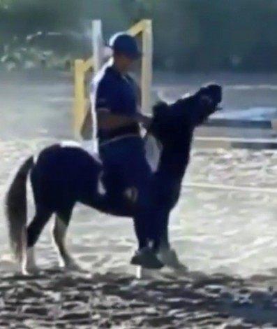 Cavaleiro Leandro Aparecido em cima do pônei em vídeo que viralizou