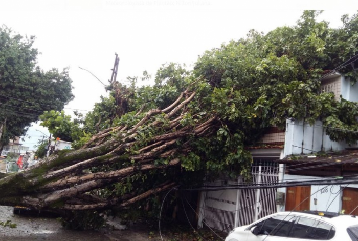 Árvore caída na Rua Silveira Sampaio, na Ilha do Governador