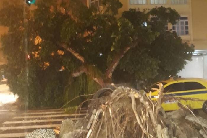 Árvore cai em Copacabana por causa das chuvas